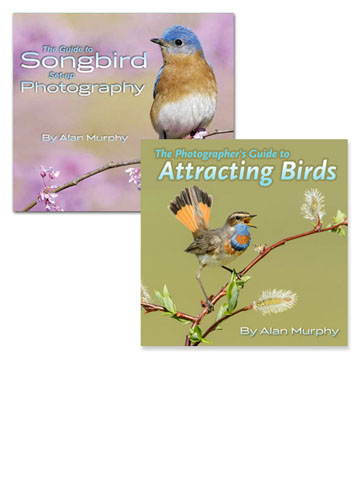 The Bird Photography Ebook Set by Alan Murphy