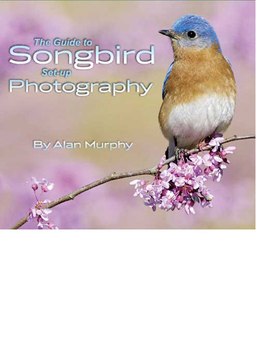 The Guide to Songbird Set-up Photography